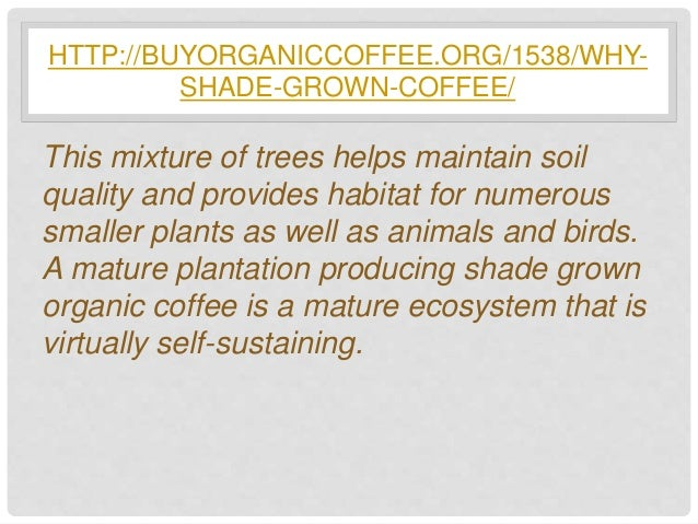 sun or shade grown coffee essay For coffee that is good for the environment and hilltribes, switch to muser coffee hill's shade-grown beans, available onboard thai airasia.