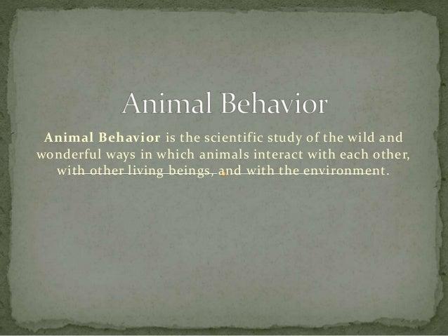 animal behaviour | Definition, Types, & Facts | Britannica.com
