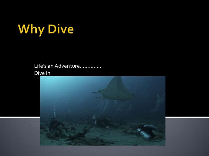 Life's an Adventure……………Dive In