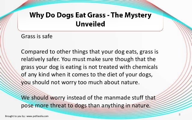 Dog Not Eating Food Only Grass