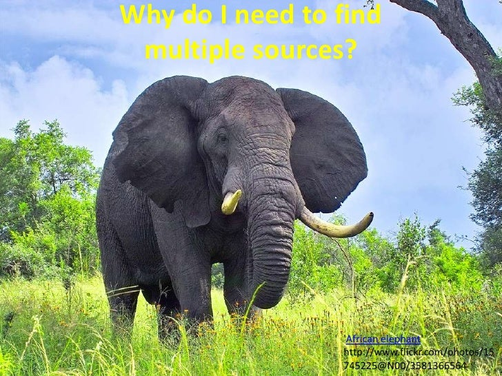 Why do I need to find multiple sources?<br />'African elephant' http://www.flickr.com/photos/15745225@N00/3581366564<br />