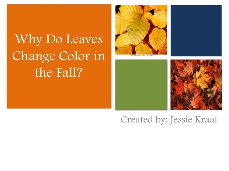 Why Do Leaves Change Color in the Fall?<br />Created by: Jessie Kraai<br />
