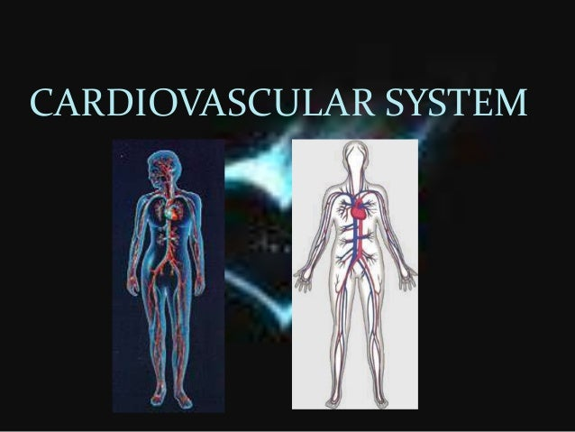 a human is a complex organism Complex functions begin to emerge at this level  it is the human being (or organism) as a whole  name the six different levels of structural organization in .
