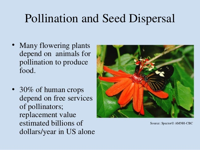 Why Bain Is Important >> Why is biodiversity important