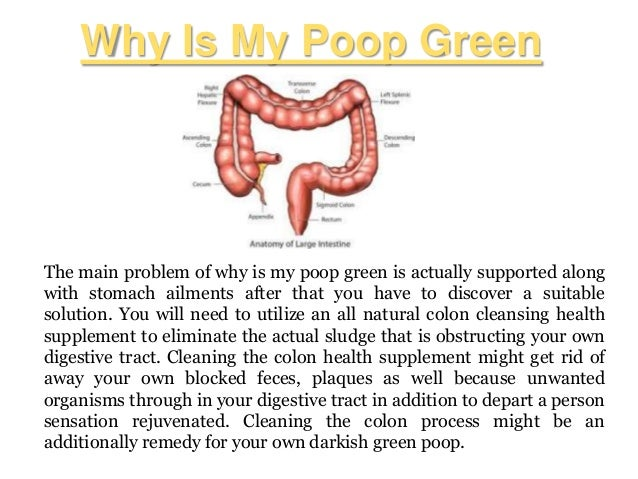 What Are My Rights During A Traffic Stop >> Why is my poop green