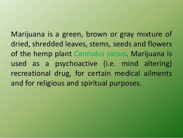 That marijuana should not be legalised essay