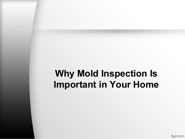 Why Mold Inspection IsImportant in Your Home
