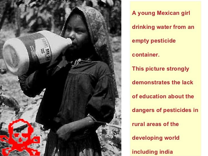 A young Mexican girl drinking water from an empty pesticide container.  This picture strongly demonstrates the lack of edu...