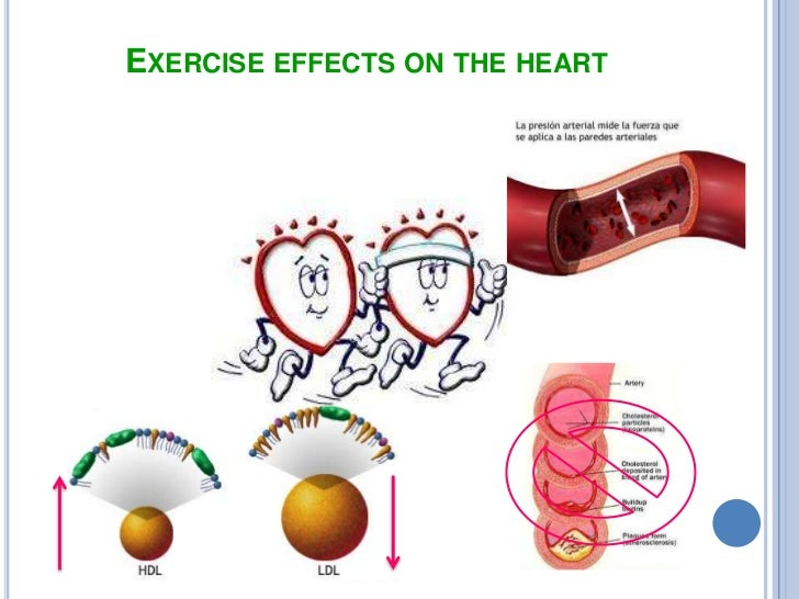 why people exercise Top ten reasons to exercise and be physically active 1 feel more energized 2 burn more calories at rest 3 these people are sometimes called explain why one includes the fact that exercise increases the hormone epinephrine.