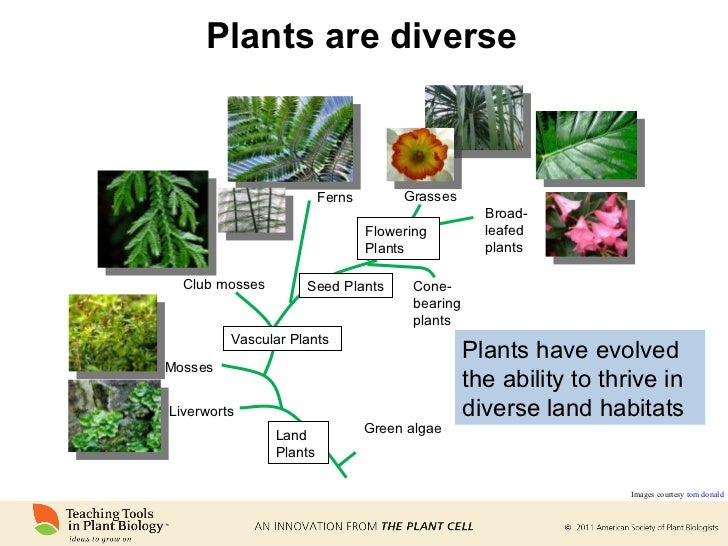 Nonflowering Plants Lesson for Kids: Names & Examples ...