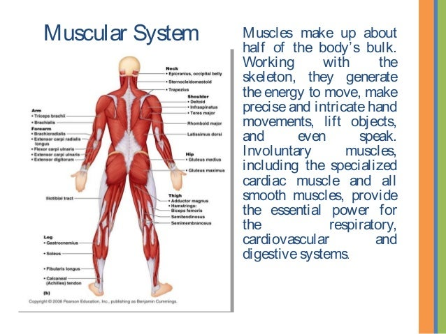 Select a Human Anatomy System to Explore