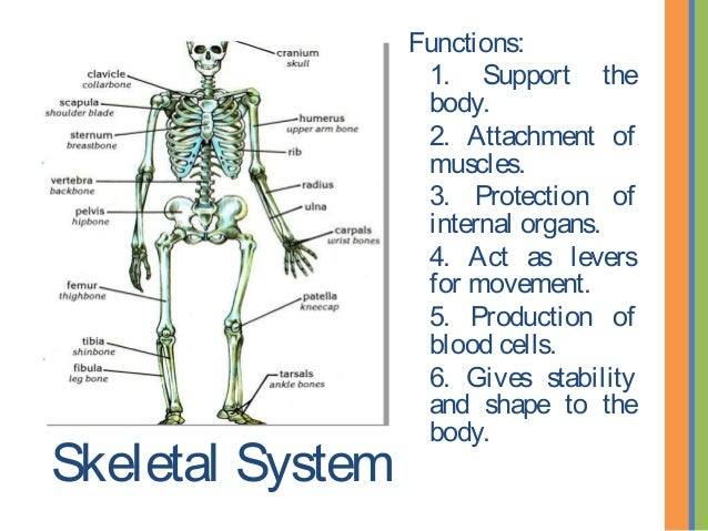 A look at the 10 systems of the human body