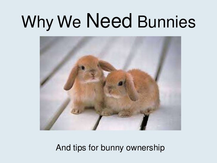 Why We Need Bunnies   And tips for bunny ownership