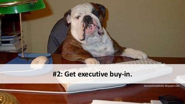 funnyanimalphoto.blogspot.com #2: Get executive buy-in.