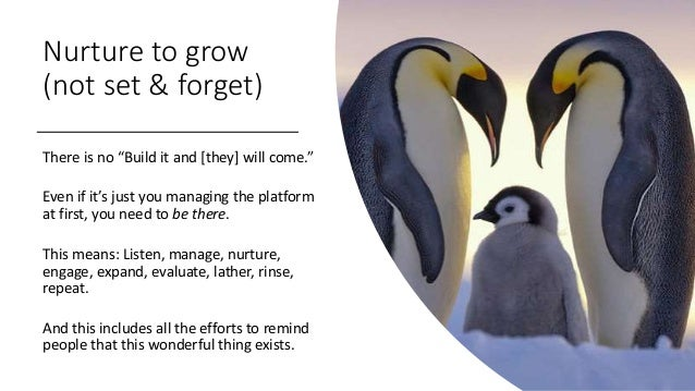 """Nurture to grow (not set & forget) There is no """"Build it and [they] will come."""" Even if it's just you managing the platfor..."""
