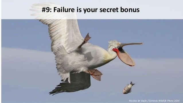 #9: Failure is your secret bonus Nicolas de Vaulx / Comedy Wildlife Photo 2016