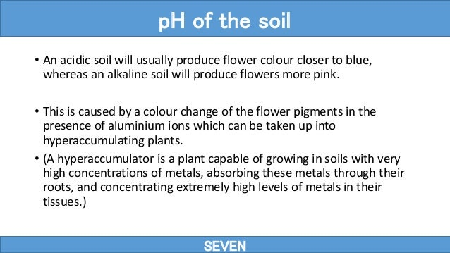 • An acidic soil will usually produce flower colour closer to blue, whereas an alkaline soil will produce flowers more pin...
