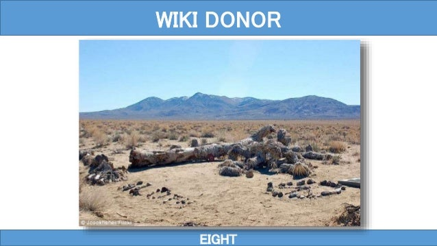EIGHT WIKI DONOR