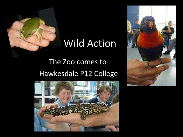 Wild Action The Zoo comes to  Hawkesdale P12 College