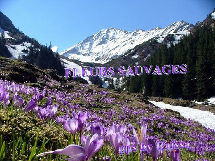 FLEURS SAUVAGES pps by Raissa