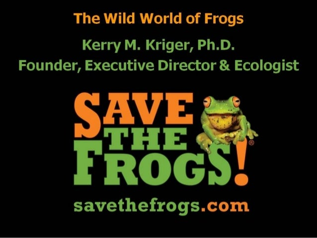 The wild world of Frogs  Kerry M.  Kriger,  Ph. D. Founder,  Executive Director & Ecologist     savethefrogs. com