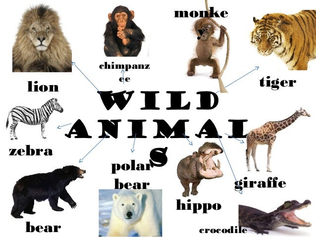 Wild and domestic animals different environment