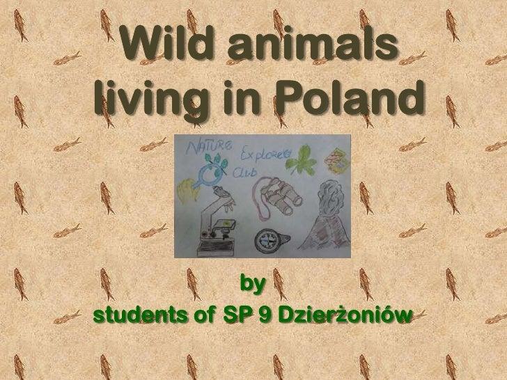 Wild animalsliving in Poland             bystudents of SP 9 Dzierżoniów