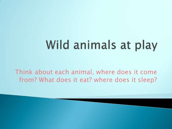 Think about each animal, where does it come from? What does it eat? where does it sleep?