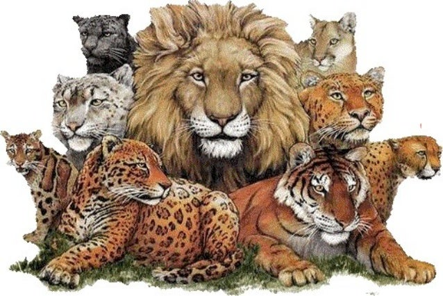 wild animals blog ppt