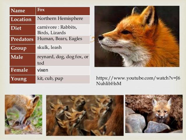 Wild animals - grade 1