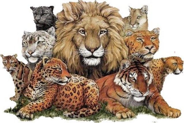 wild animals ppt