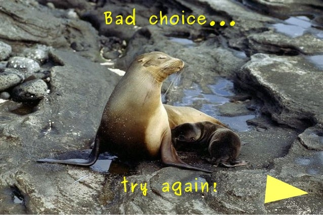 Bad choice...  try again!