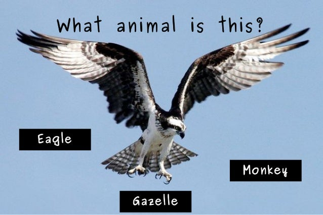 What animal is this?  Eagle Monkey Gazelle