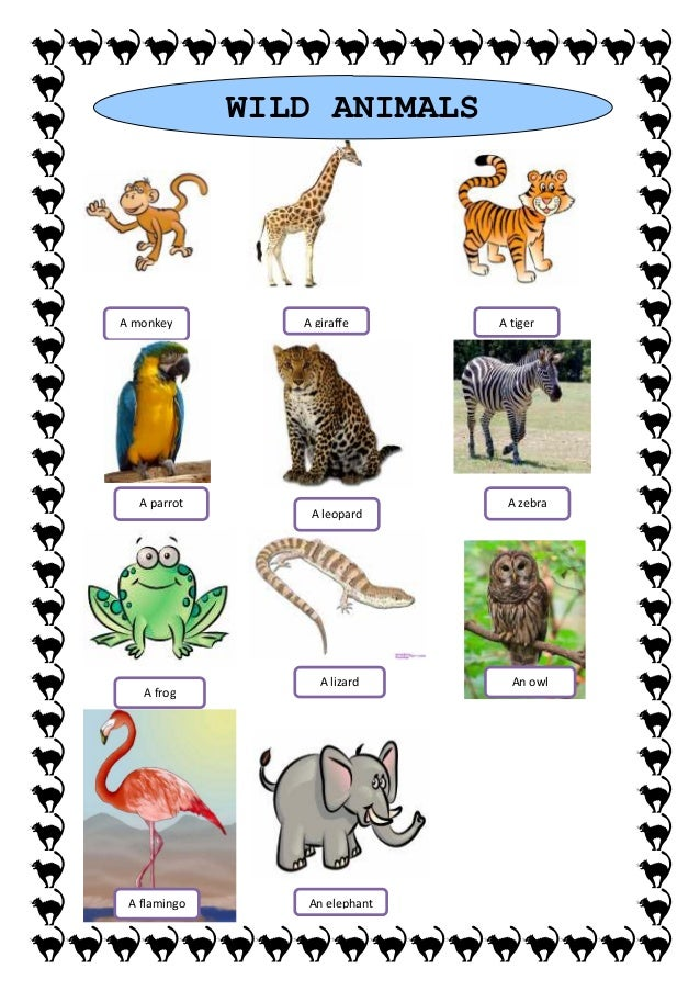 List of wild animals pictures and name
