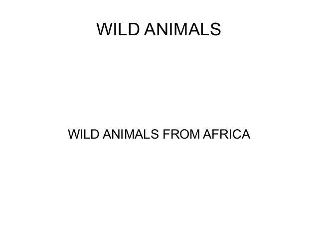 WILD ANIMALS WILD ANIMALS FROM AFRICA