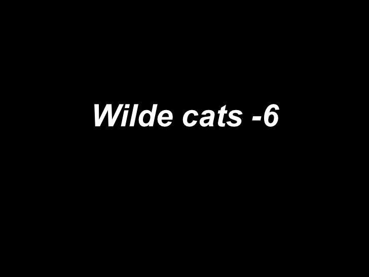 Wilde cats -6