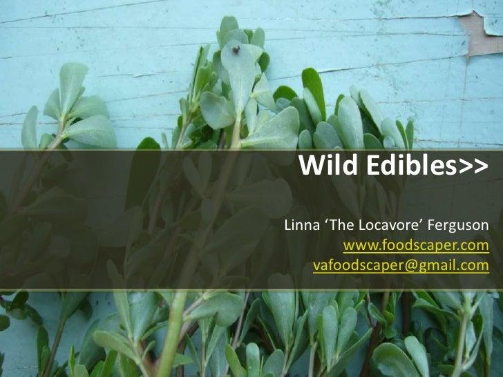Wild Edibles>>Linna 'The Locavore' Ferguson www.foodscaper.comvafoodscaper@gmail.com<br />