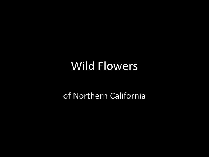 Wild Flowers<br />of Northern California<br />