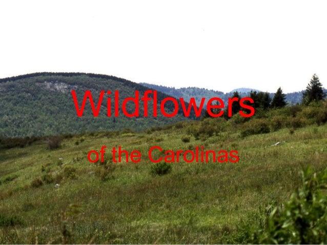 Wildflowers of the Carolinas