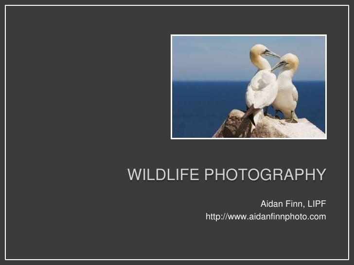 WILDLIFE PHOTOGRAPHY                      Aidan Finn, LIPF        http://www.aidanfinnphoto.com