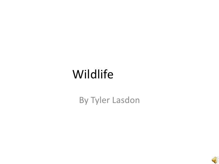 Wildlife<br />By Tyler Lasdon<br />