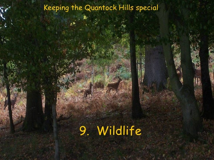 9.  Wildlife Keeping the Quantock Hills special
