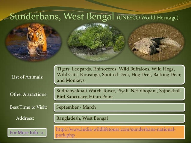 essay on wildlife sanctuaries Essays - largest database of quality sample essays and research papers on wildlife sanctuaries in india.