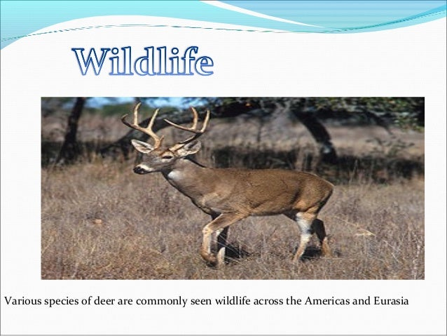 Various species of deer are commonly seen wildlife across the Americas and Eurasia