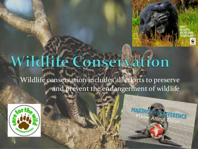 The Effects of Rainforest Depletion on Animals