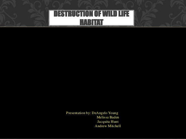 Presentation by: DeAngelo Young Melissa Baden Jacquita Hunt Andrew Mitchell DESTRUCTION OF WILD LIFE HABITAT