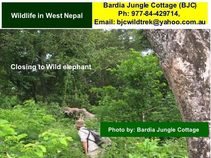 Wildlife in Nepal   Bardia National Park Slide 2