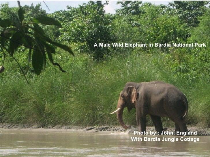 Wildlife in Nepal   Bardia National Park Slide 3