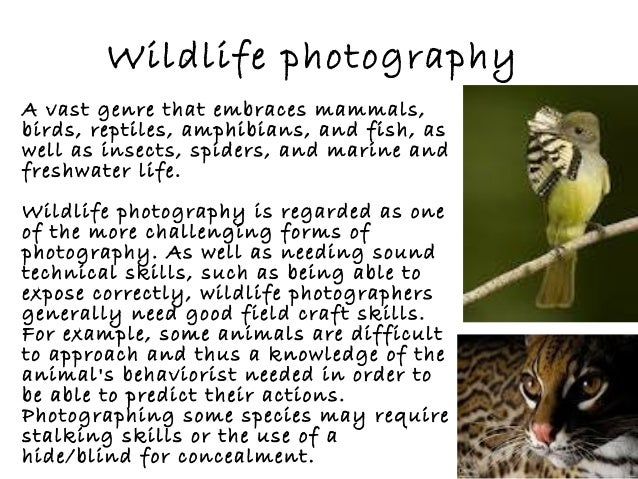 Wildlife photography A vast genre that embraces mammals, birds, reptiles, amphibians, and fish, as well as insects, spider...