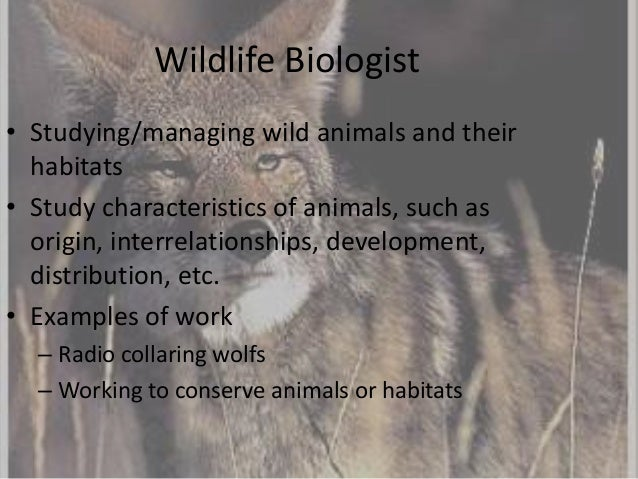 what do wildlife biologists do